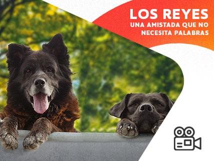 Ciclo Perut + Osnovikoff - Los Reyes