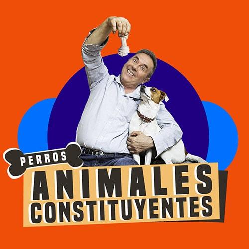 Perros Streaming Punto Play - Santiago